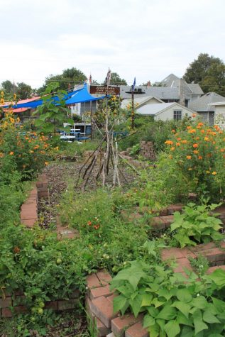 Gardening goodness: LCSC has a garden!